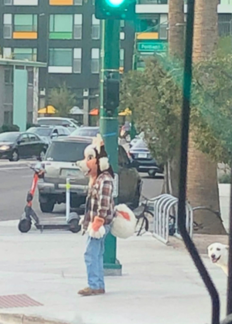 A person is suited in an orange, black, and white anthropomorphic doglike costume in Downtown Phoenix, Arizona